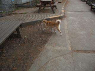 20061208 ムツゴロウ王国 チキン犬