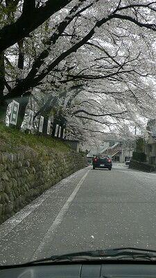 20070408 旭温泉 桜