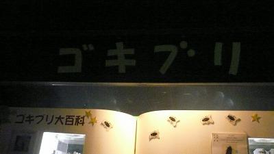20071028 多摩動物公園 ゴキブリ