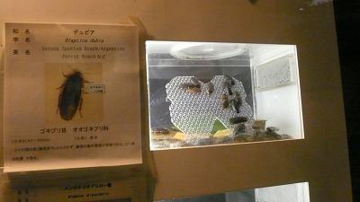 20071028 多摩動物公園 ゴキブリ2