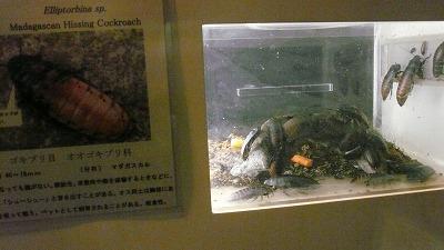 20071028 多摩動物公園 ゴキブリ4
