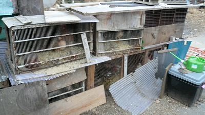 20080121 北群馬渋川郷土館 犬小屋