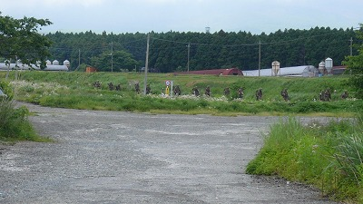 20080526 たまご拾い牧場 自衛隊