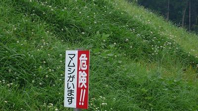 20080713 九重夢大吊橋 マムシ