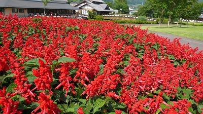 20080724 田園プラザ川場 お花畑