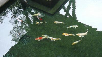 20080724 貝掛温泉 鯉