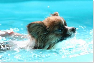 Vivi in the pool !!