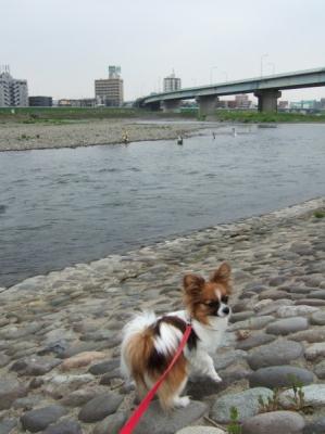 川に飛び込んでもよい?
