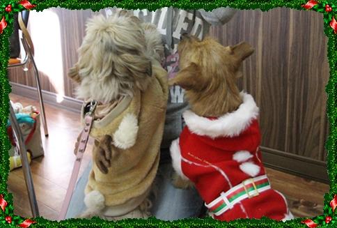 サンタさんとトナカイさん♪