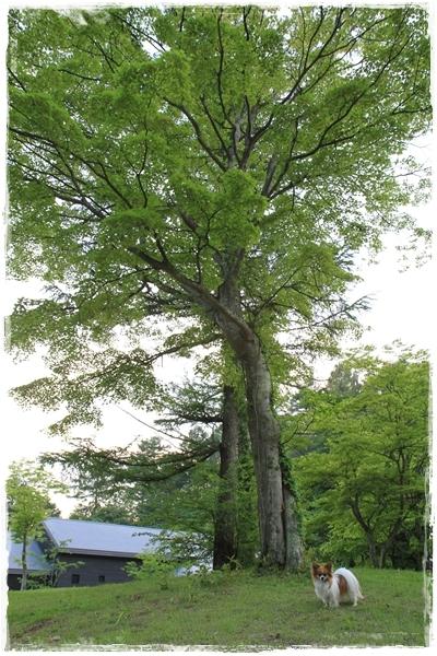 木とびびたん♪