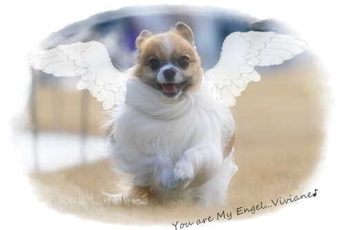 天使ちゃん・・・