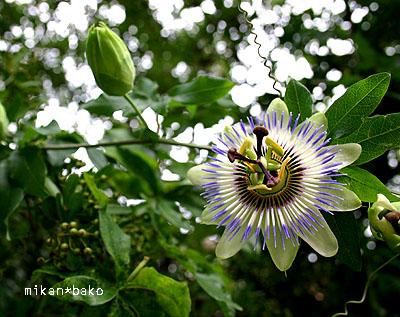 宇宙の花??