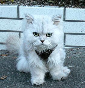 服を着た猫ちゃん