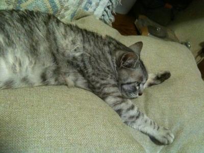 愛猫のびる