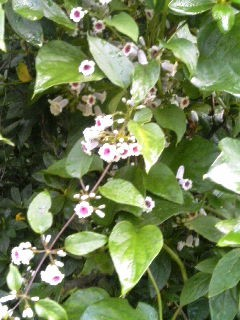 白くて小さい可憐な花、君の名は。。。