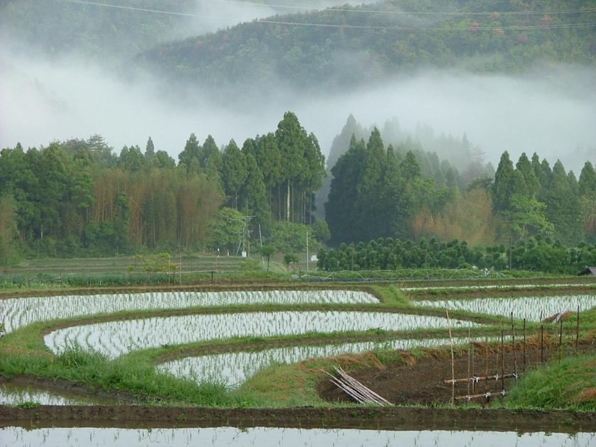 里山 越畑の段々畑