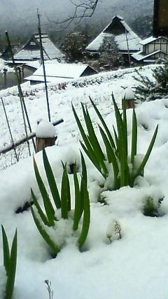 京都、越畑、春の雪景色