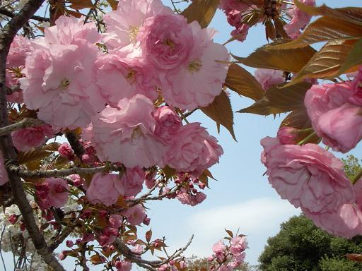 花の色もそれぞれに、美しい
