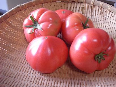 おいしいトマト