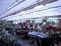 村市場の花売り場