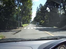 武蔵野の街路樹