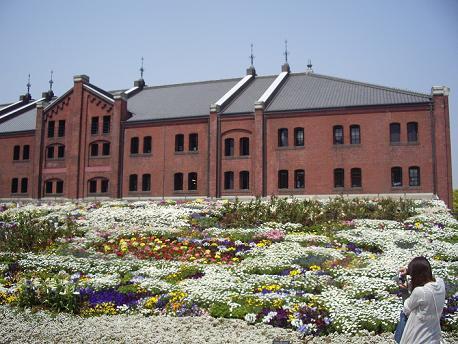 赤レンガ倉庫 白い花