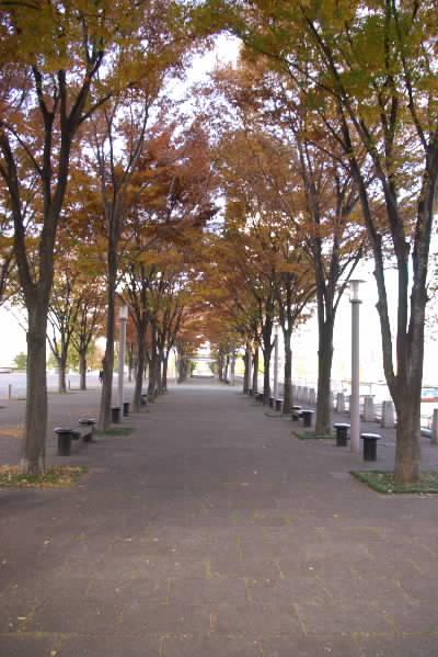 横浜美術館5
