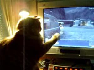FF11 モグと猫の出会い