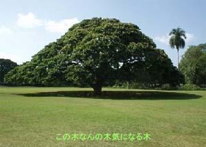 FF11 この木なんの木