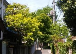 道場の隣家の柿