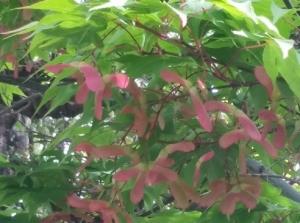 天王寺の紅葉のアップ