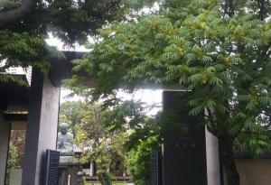 天王寺のハゼの木