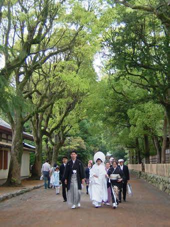 新緑の花嫁