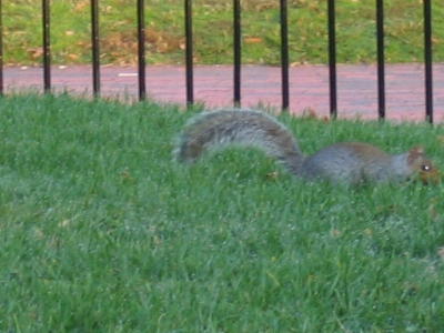 ワシントンのスミソニア博物館前の芝生のリス
