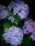 090608_2011~0002-0001.jpg