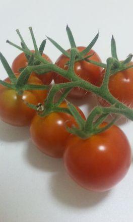 20100711トマト