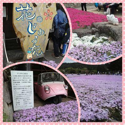 三田「花のじゅうたん」