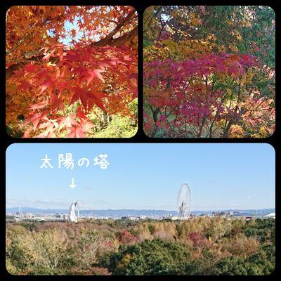 万博公園☆紅葉