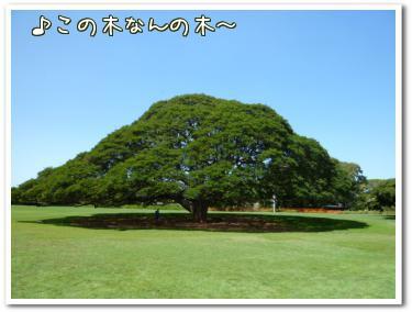 モアナルア・ガーデン1