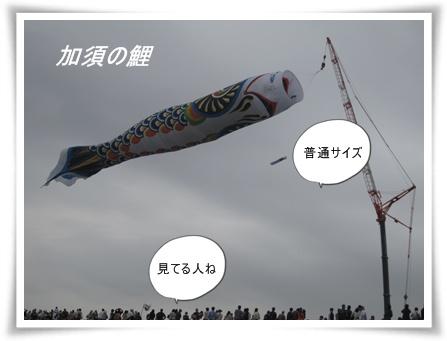 加須の鯉2