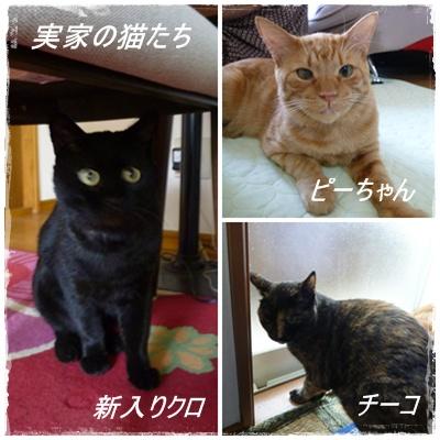 実家の猫たち