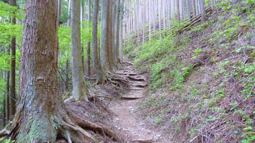 植林の山道