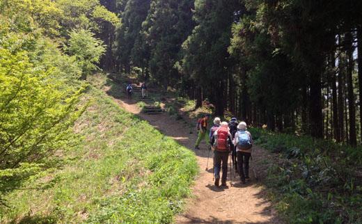 景信山直下の木段