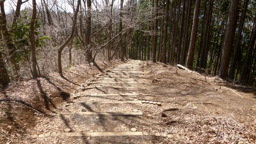 木段の緩い下り