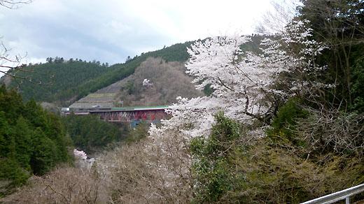 桜と中央高速