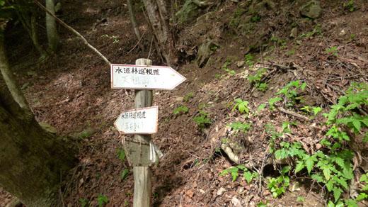 林業用のものか?