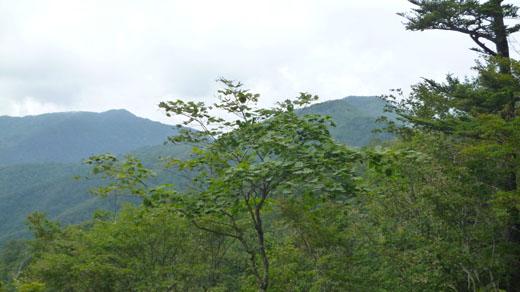 雲取山と芋ノ木ドッケ