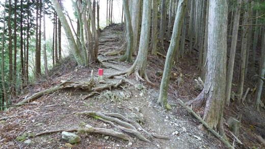 少し急な登り道