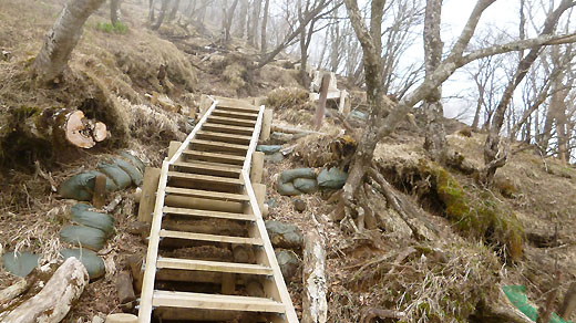 山頂直下も木段