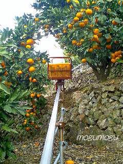 蜜柑のトンネル